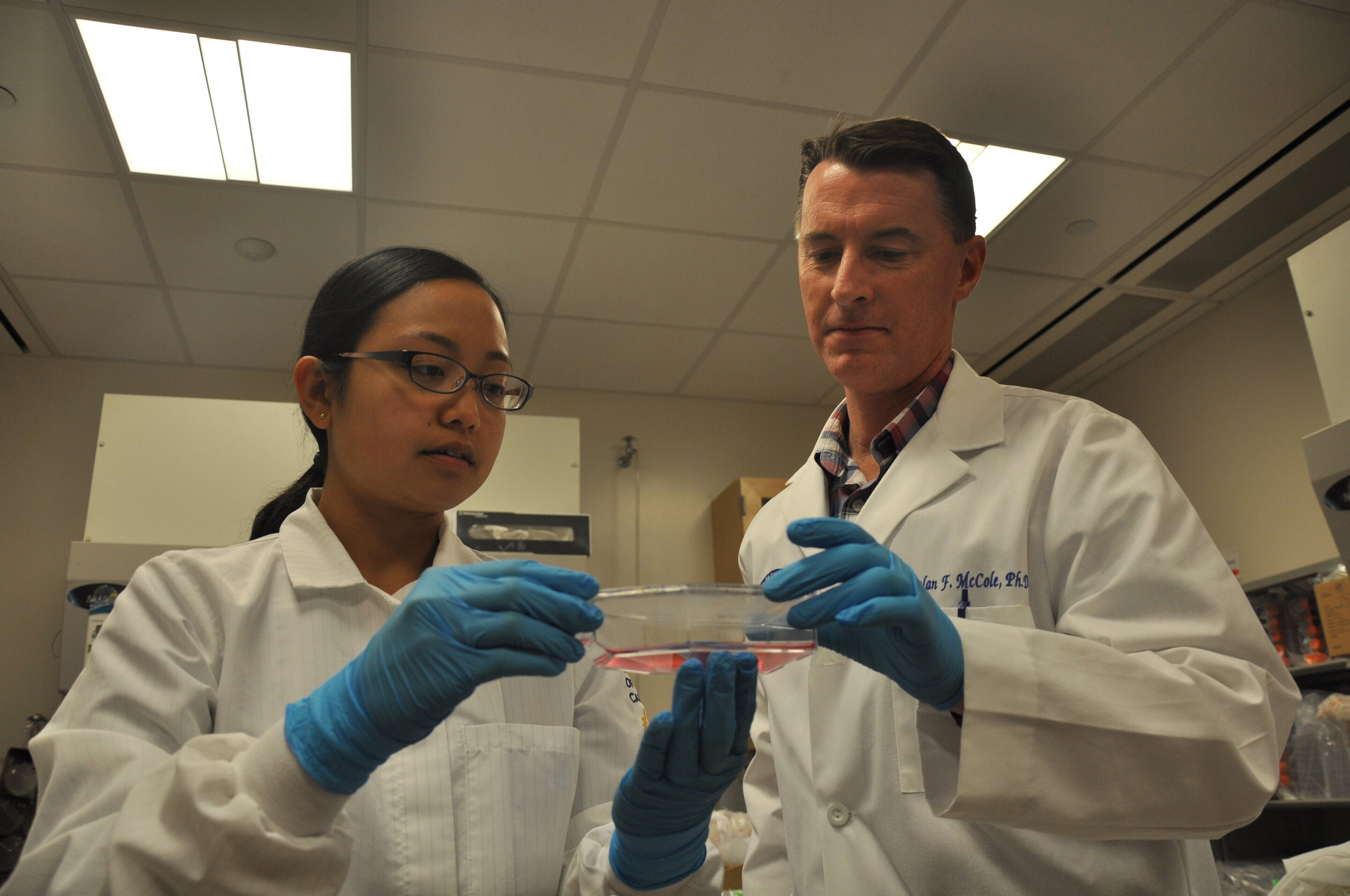 Declan McCole (right) and his graduate student Anica Sayoc-Becerra are seen here examining a culture flask of intestinal epithelial cells prior to treating them with tofacitinib (Credit: I Pittalwala, UC Riverside)