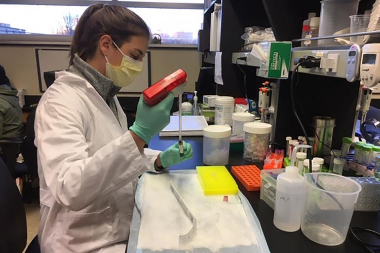 Nadja Pejovic, a visiting medical student and co-first author of a study on the liquid biopsy, works with a sample in the lab of Dr Aadel Chaudhuri, the study's senior author. (Credit Peter Harris)