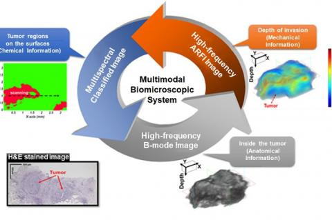 Conceptual diagram showing characteristics of Multimodal Biomicroscopic System (Credit: Daegu Gyeongbuk Institute of Science and Technology (DGIST))